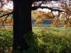 2011_11_05_schlosspark_012
