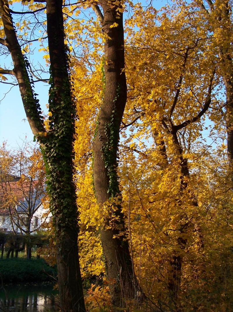 2010_10_herbst_und_blumen_im_schlosspark_023