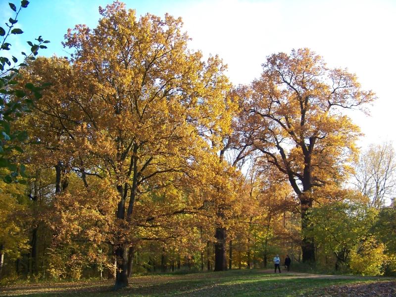 2010_10_herbst_und_blumen_im_schlosspark_030