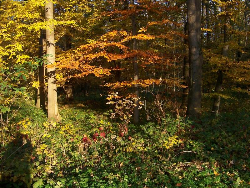 2010_10_herbst_und_blumen_im_schlosspark_044