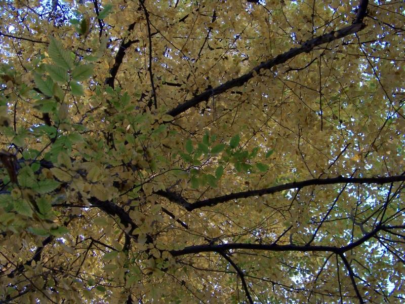 2011_11_05_schlosspark_022