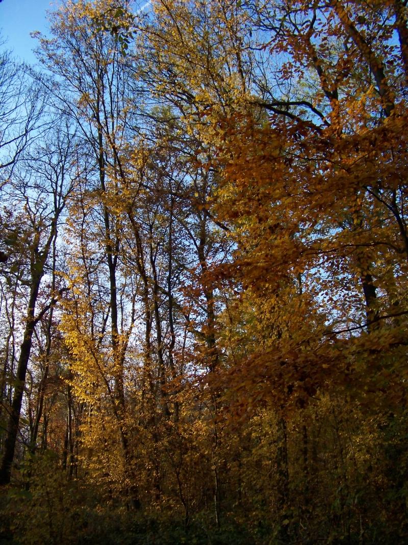 2011_11_05_schlosspark_032