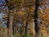2011_11_05_schlosspark_014