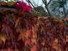 2011_11_05_schlosspark_042