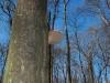 2011_02_26_schlosspark_014